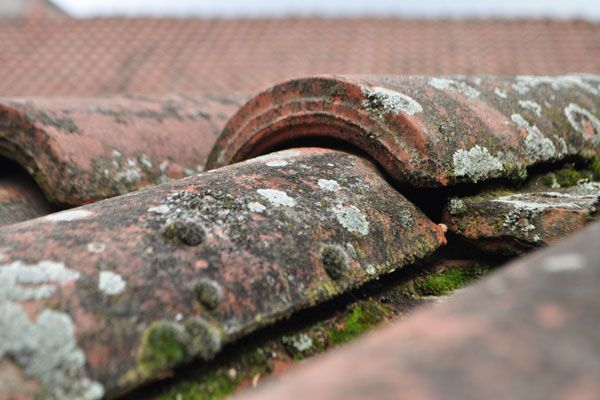 The Importance of Proactive Roof Maintenance